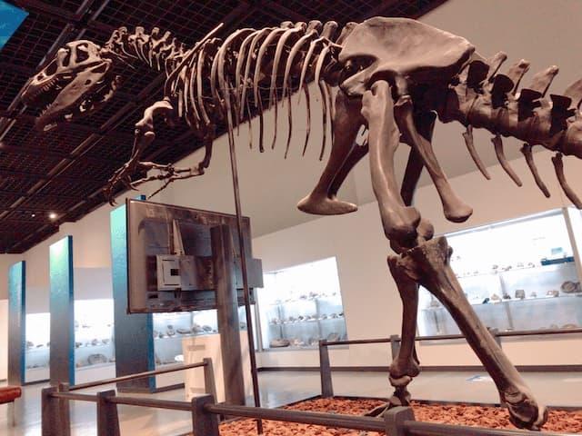 三笠市立博物館の恐竜のレプリカ アロサウルス