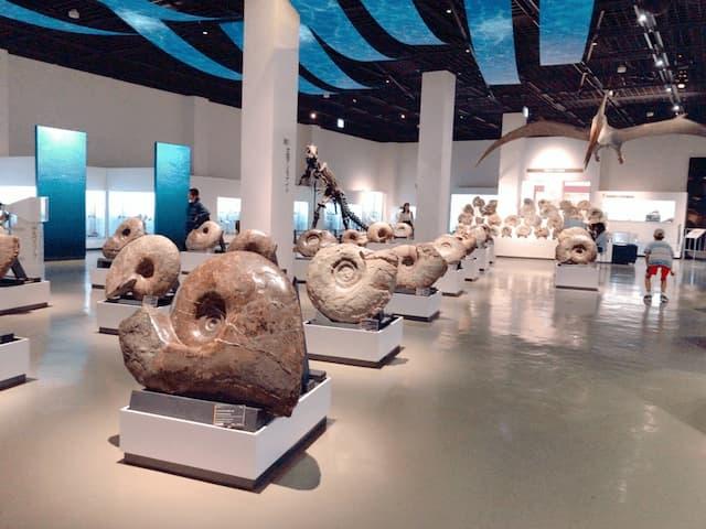 三笠市立博物館のアンモナイト