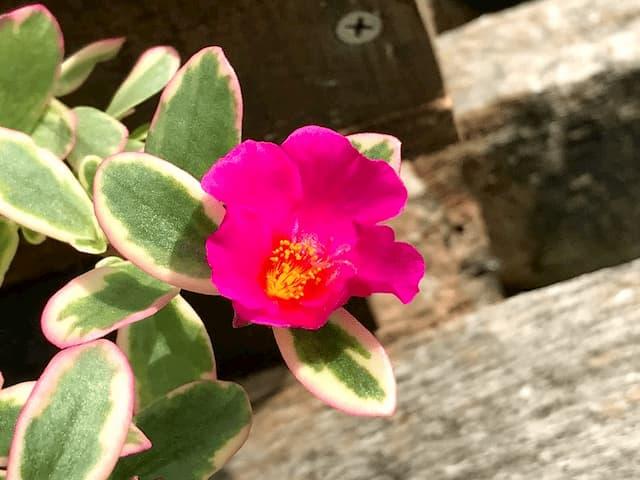 ほくほく庵裏に咲いていた花